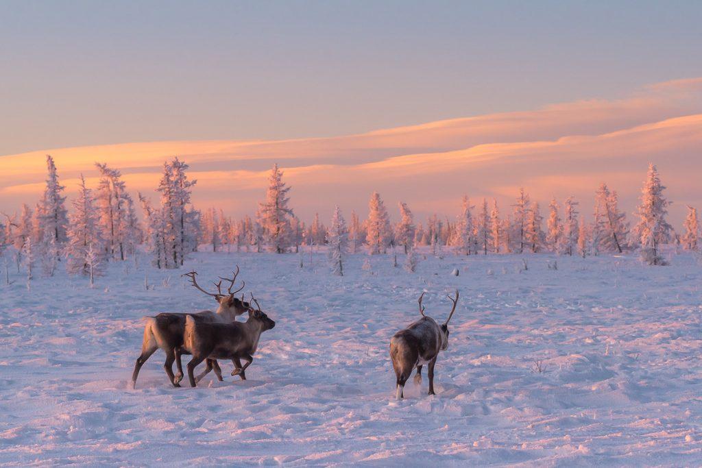 Мороз на Ямале